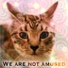 cats - tori glare