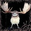 owlmoose