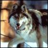 silvawolf5