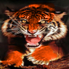 spotted_tiger userpic
