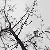 roseatesque userpic