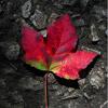 gypsybug userpic