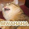 Kitties {Willow is evil!}