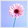 pinkpeppercorns userpic