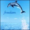 animal - freedom