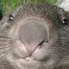 dr_demon userpic