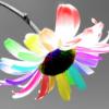 Rachel's rainbow flower