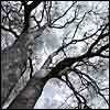 Мрачное дерево