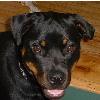 babydog userpic