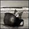 kittyhelmet