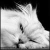 ozverin01 userpic