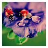 green_limes userpic