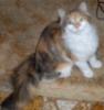 cgbookcat1 userpic