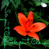 serpentclara userpic