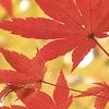 twincityhacker: Autumn