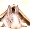 animals- Bunny loves to read.