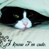 karera_squid userpic