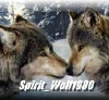 spirit_wolf1980 userpic