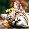 feline3flowerbuddy