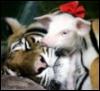 CatDog: Tirga & Piglet