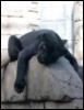 CatDog: Черная пантера