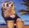 iammrferret userpic