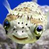 [fishy.]