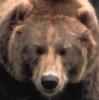 mamma_fire_bear: Bear