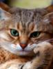bolshoy_kotina userpic
