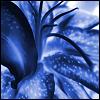 blackxillusion userpic