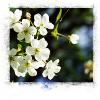 flores azul y blanco
