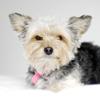 theperfectdog userpic