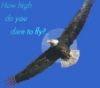eagles, Flying, height, God