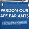 pardon our ape ear ants