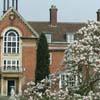 St. Hugh's magnolia