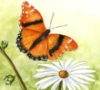 Margie: Butterfly and Dasie