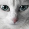 alley_cat_rus userpic