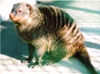 drunkenmongoose userpic