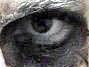 svangr_troll userpic