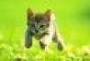 kitty wee