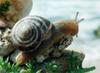 # 3, snail # 3