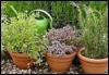 arliss: herb pots