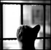 kitty in window 2
