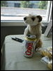 meerkat and diet coke