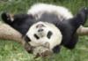 Yay Panda!