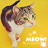 who_says_meow
