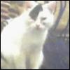 jelli_cat userpic