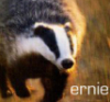 badger_ernie userpic