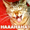 Ha ha ha (laughing cat)
