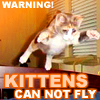 Kittens cannot fly